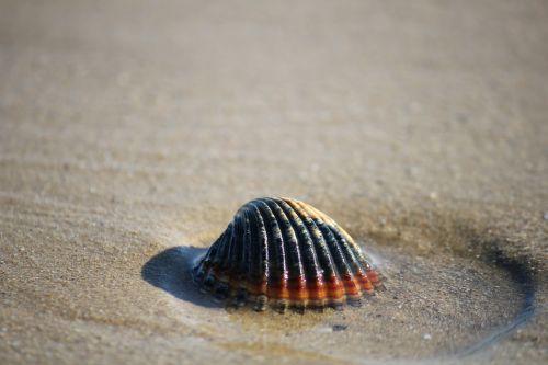 shell sand sea