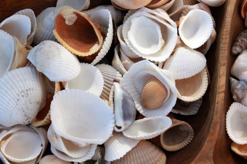 shell shells seashell