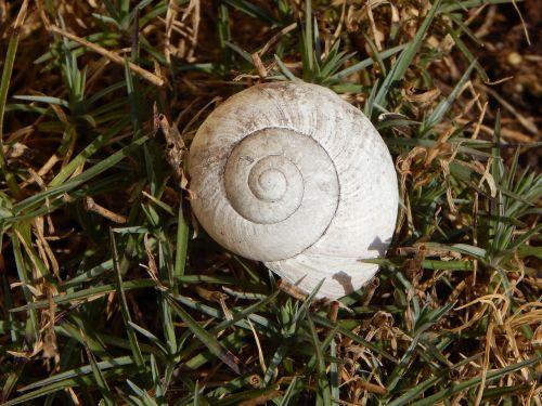 shell garden snail