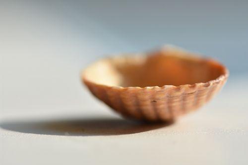 shell macro seashells