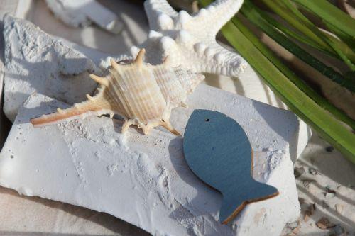 shell fish deco
