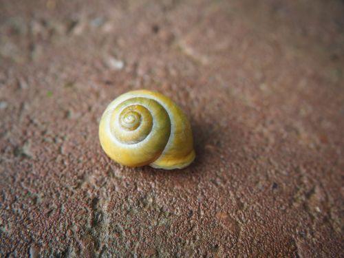 shell nature garden spiral