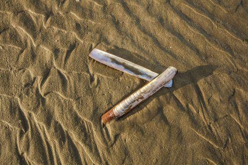 shell ocean beach
