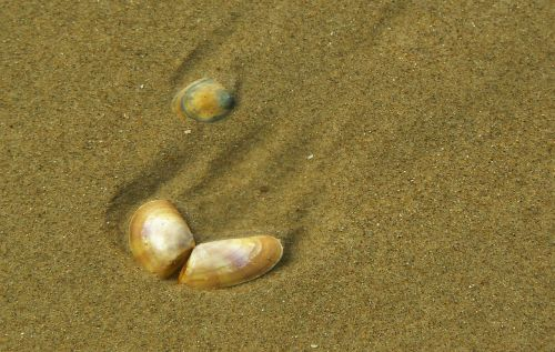 shell close sea