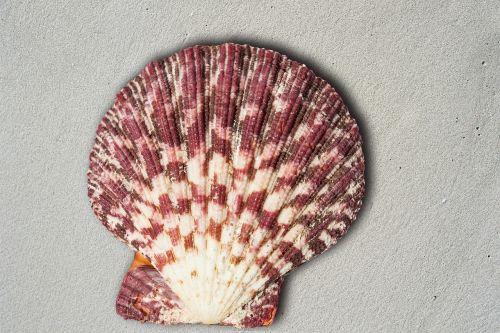 shell housing sea