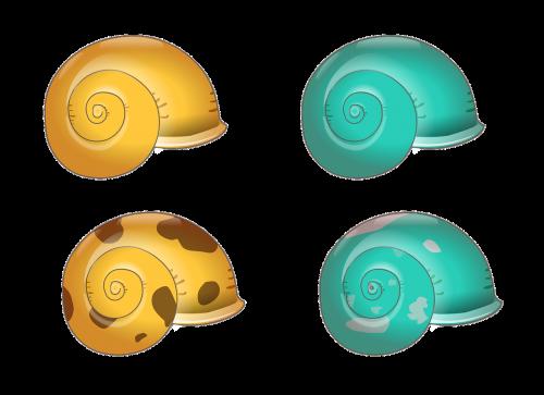 shell texture natural