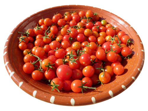 shell clay bowl tomatoes
