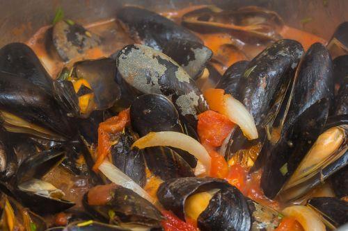 shell mussel seashell
