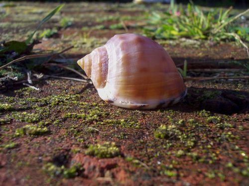 shell close-up mollusk