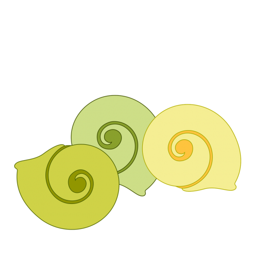 shell decorative spiral