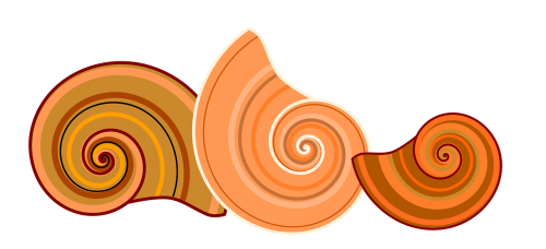 shell rotated spiral