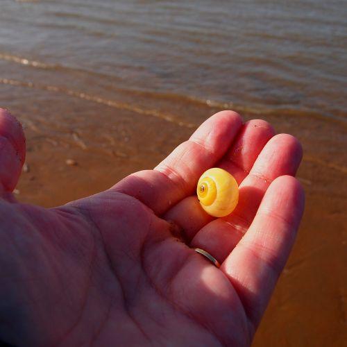 shell hand yellow