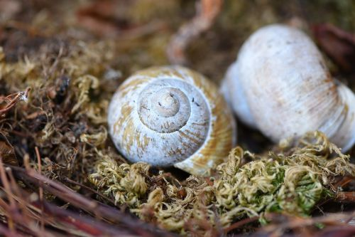 shell empty snail shell leave