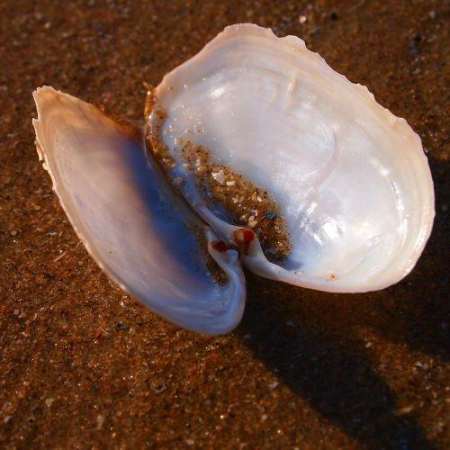 shell open beach