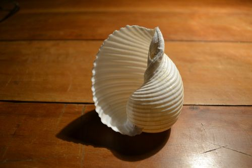 shell purity object