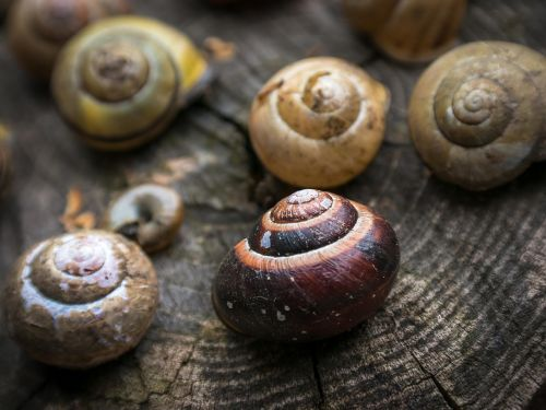 shell snail home