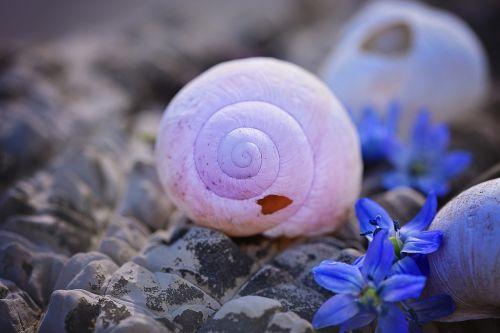 lukštas,tuščia,tuščia sraigė,sunaikintas,pažeista,gėlės,Chionodoxa luciliae,akmuo,Uždaryti