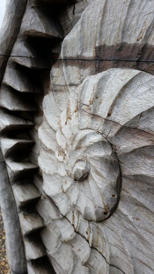 shell sculpture natural
