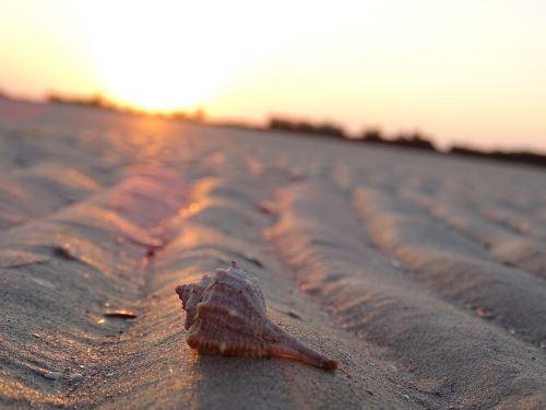 shell sand ebb