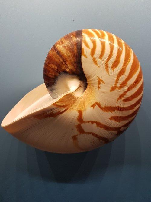 shellfish  evertebrat  exoskeleton