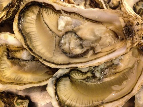 shells seafood oysters