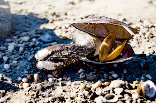 shells summer coast