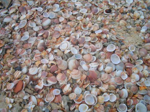 shells texture brown