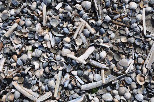 shells shell beach