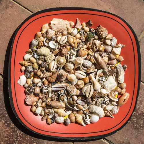 shells sea plate