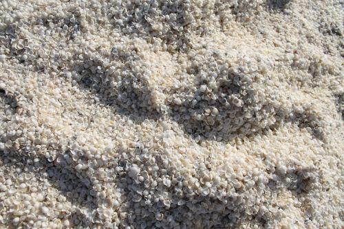 shells shark bay beach