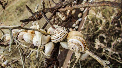 shells snail colony