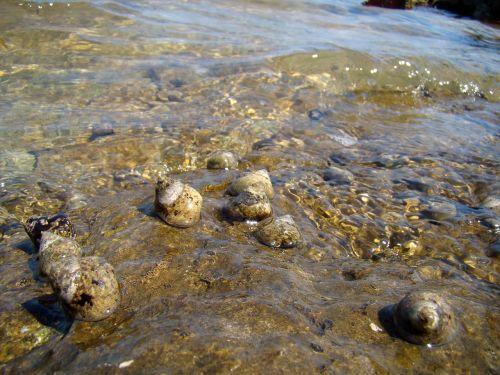 shells snails water