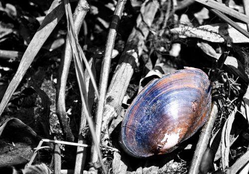shells dead shells snails