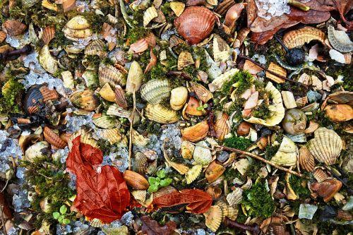 shells leaves grit