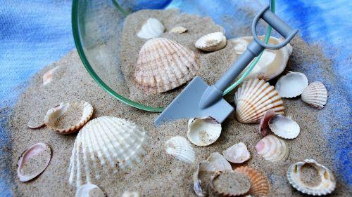 shells dream holiday