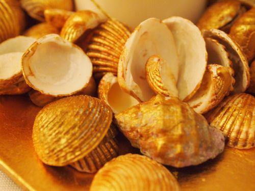 shells decoration clam