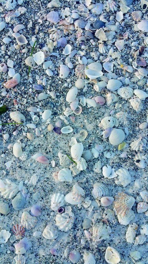 shells sea shells sea