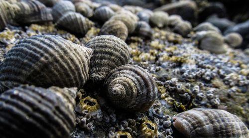 shells seashell sea
