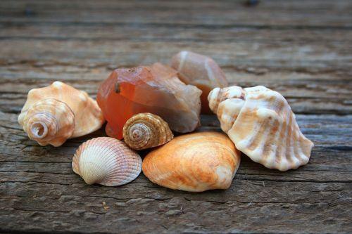 Shells And Semi-precious Stone