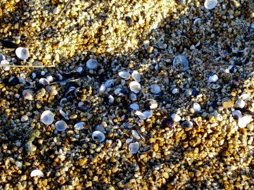 Shells On Sandy Seashore