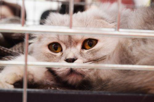 shelter cat cage adoption