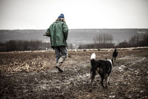 shepherd lonely dog