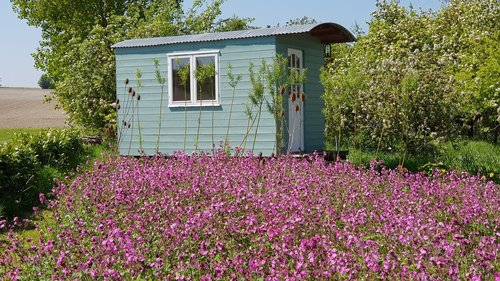 shepherds hut  nature  summer