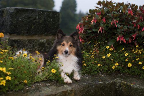 wall lying dog