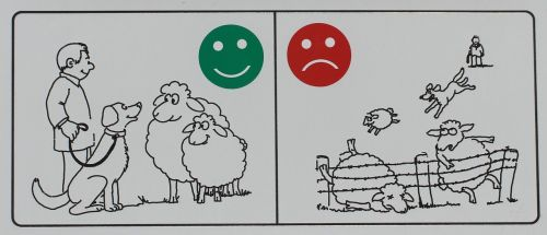 skydas,pastaba,ženklas,informacija,informacijos lentos,nuoroda,avys