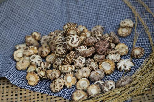 shiitake mushroom the original ecology photography