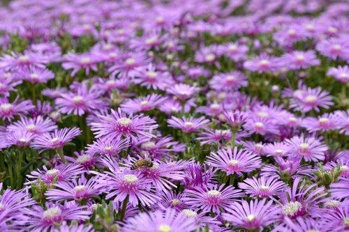 shine  flowers  purple