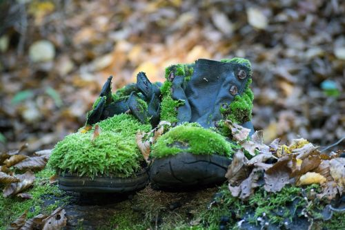 shoes moss forest