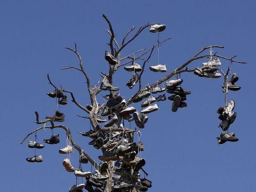 shoes tree balboa park