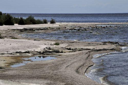 Shore Of Salton Sea